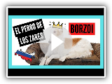 BORZOI: el perro GALGO RUSO   5 Datos y 10 Curiosidades que quizá no conozcas