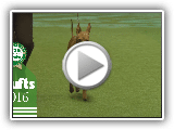 Best of Breed - Cirneco Dell'etna | Crufts 2016