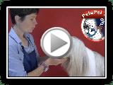 PELUQUERIÌ ?? ein Hund von Bearded Collie MIT VANESSA CARDONA