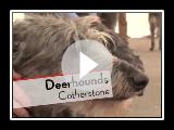 Deerhounds - Bests of Breed
