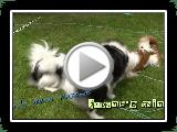 menton japonais #01 -  Puppy love