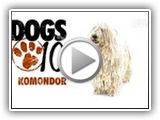 Dogs 101- Komondor