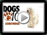 Cães 101- Komondor