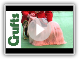 Crufts 2012 - Best of Breed Lhasa Apso