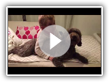 Nora's first love (Lagotto Romagnolo)