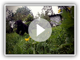 Watch the Karelian Bear Team in Action