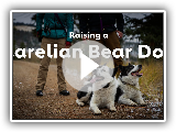 Raising a Karelian Bear Dog | Rover.com