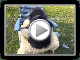A sheepdog charm
