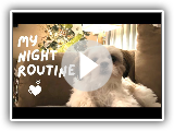 Shih Tzu Puppy's Night Routine | Bedtime Routine