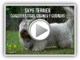 Skye Terrier: Características, Parenting and Care - TvAgro by Juan Gonzalo Angel