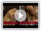 Braque hongrois ou  poil court - Canis lupus familiaris (Linnaeus, 1758) - Salon de l'Agriculture 2015