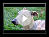 Trusty's Unique Shelter Journey: Pet Orphans Episode 11