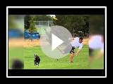 Boston Terrier vs. Basador