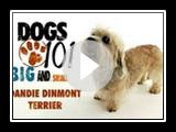 Dogs 101- Dandie Dinmont Terrier