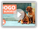 DOGO de BURDEOS - Características y adiestramiento