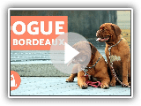 Dogue de Bordeaux - Characteristics and Training