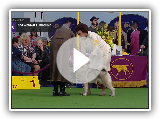 Norwegian Elkhounds | Breed Judging 2019