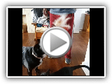 Bassador | Bassador Playing With Black Cat | Cat Friendly Dog Breed