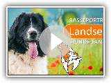 Landseer [2019] race, Appearance & Nature
