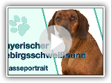 Bavarian mountain welding dog in breed portrait | Dog breed with a strong hunting instinct?