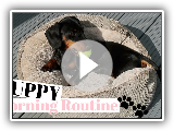PUPPY MORNING ROUTINE MINIATURE DACHSHUND PUPPY!