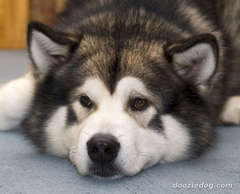 Good Alaskan Dog Names