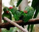 Amazona-Tamaulipeca-(9)