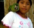 Guacamayo-Ventrirrojo-(3)