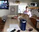 Jolie come de la encimera de la cocina en la casa familiar de los Pienaars.