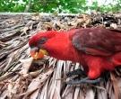 lori-cardenal-3