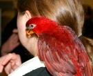lori-cardenal-4