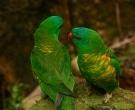 lori-escuamiverde-1