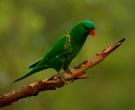 lori-escuamiverde-3