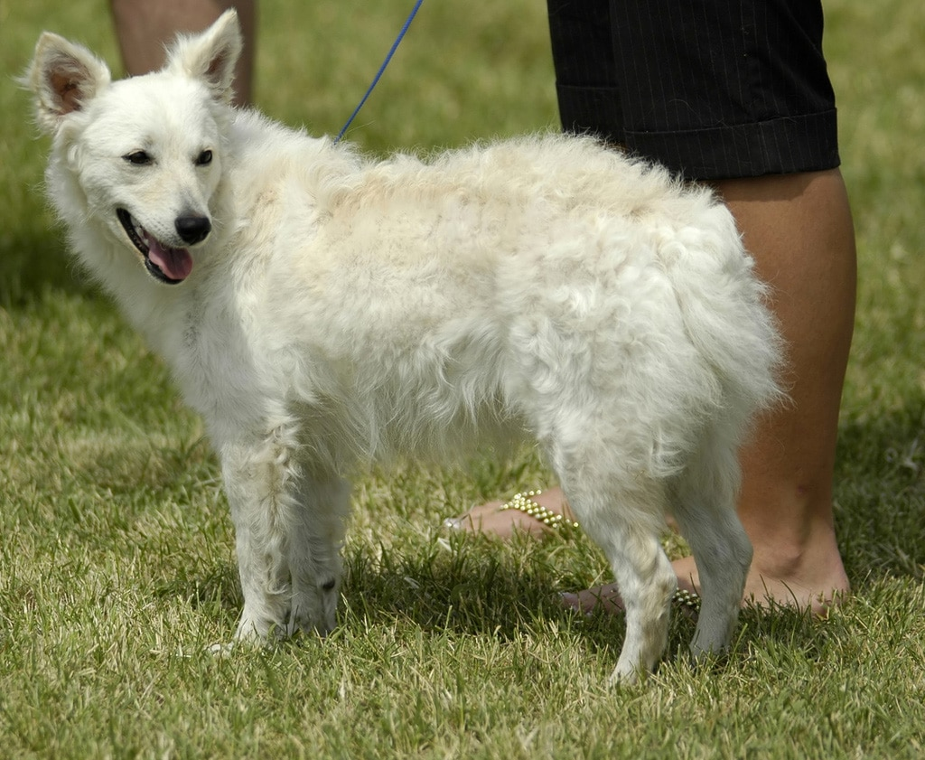Easy To Maintain Dog Breeds