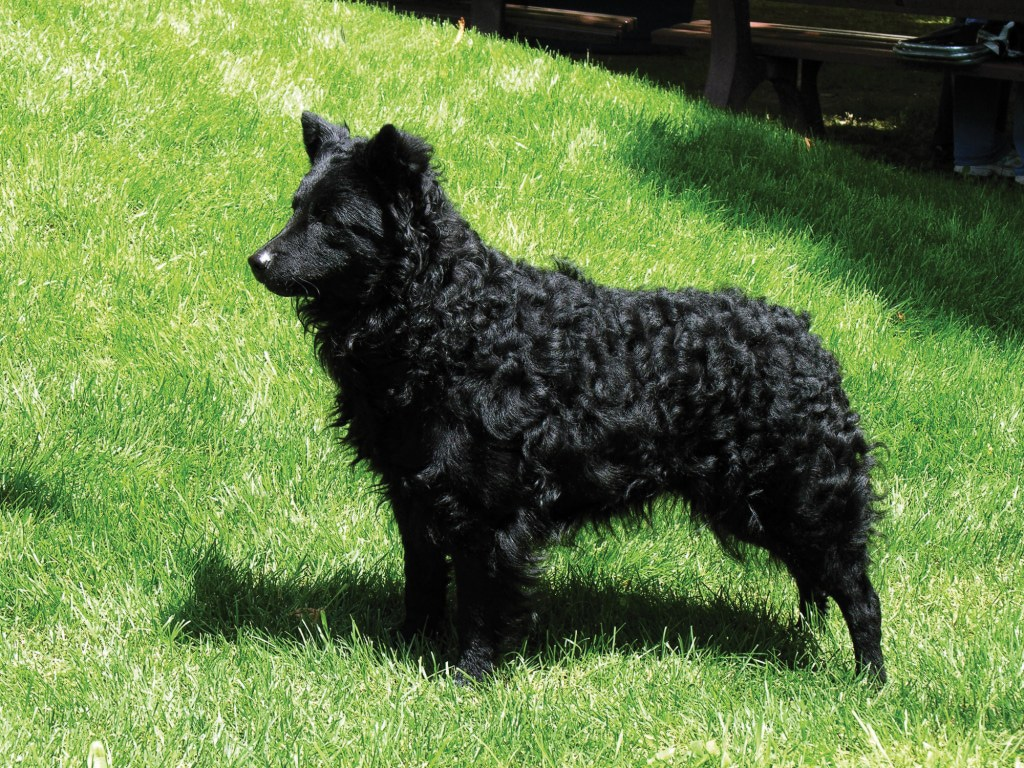 What Is Flyball Training For Dogs