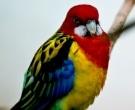 Perico-Multicolor-(3)