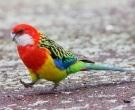 Perico-Multicolor-(5)