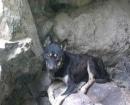 perro-gomera1