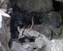 perro-gomera3
