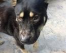 perro-gomera5
