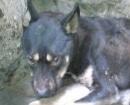 perro-gomera6