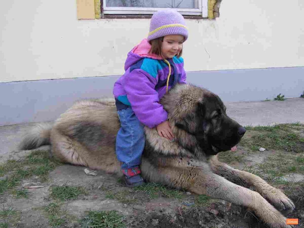 dogs as pets Keeping of dogs as pets has traditionally been frowned upon in this part of the world.