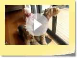 Airedale: The All-New Adventures of Ptolemy Molly & Gertrude Part 3