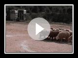 CA de Bestiar in Acció