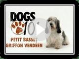 Dogs 101 - Petit Basset Griffon Vendeen