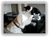 Cat and Dog Play Fighting