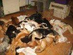 Perros_muertos
