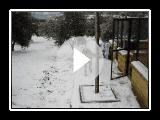 Mastín Español en la nieve