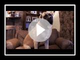 Dogs 101 - English Mastiff