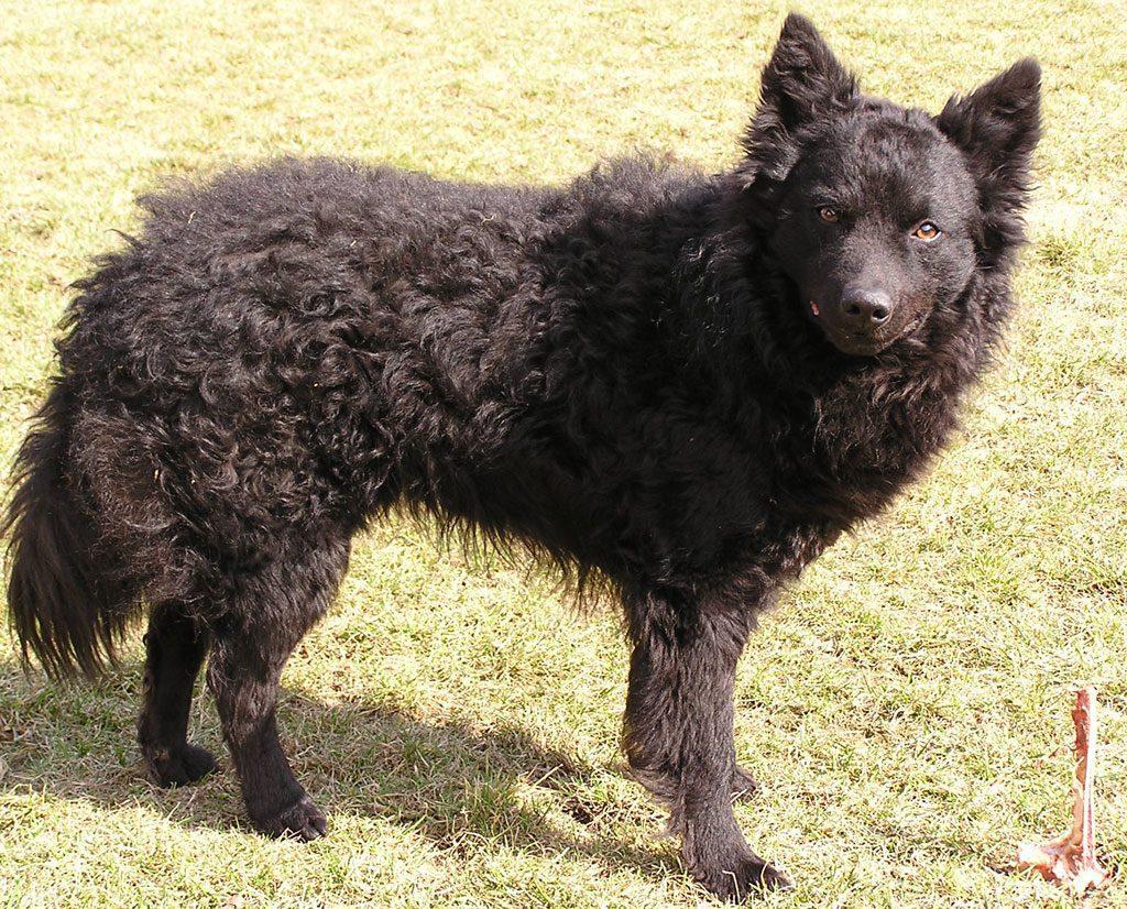 20 razas de perros yahoo dating 5